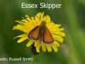 Essexl-Skipper-DSC_1198