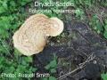 Dryads-Saddle-090