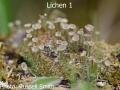 Lichen-1-DSC_0647
