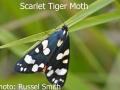 Scarlet-Tiger-Moth-DSC_0771