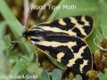 Wood-Tiger-Moth-DSC_0640