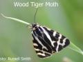 Wood-Tiger-Moth-DSC_0820