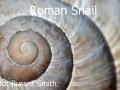 Roman-Snail_DSC_0083